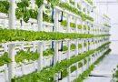 El futuro de la alimentación se llama agricultura vertical